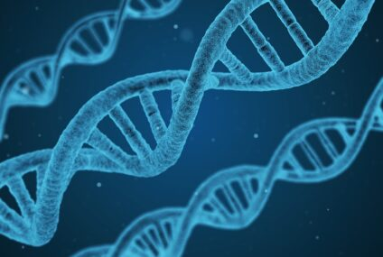 Cnr, spliceosoma e sintesi proteica:  come si propaga l'informazione giusta nelle cellule