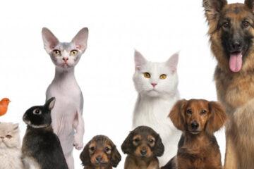 Animali, una lente per conoscerli