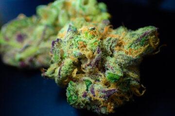 L'uso di Marijuana potrebbe condizionare la fertilità