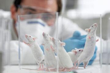 Metodi alternativi alla ricerca con animali: si riparte da zero.