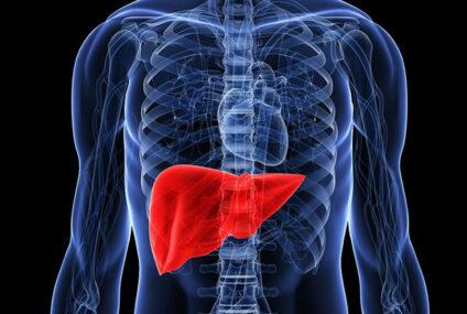 Anche il fegato ha cellule staminali, che potrebbero essere utilizzate riducendo i trapianti