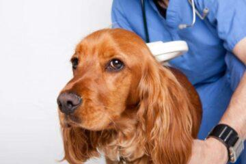 Il tumore più antico comparso sulla Terra ha 6 mila anni, comune nei cani