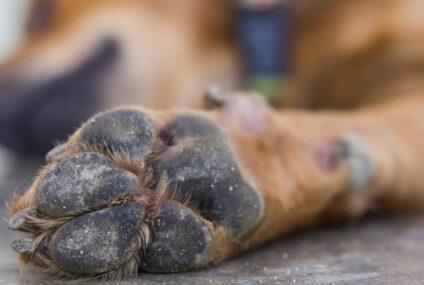 Campania, arriva il 118 per gli animali feriti