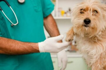 Numero verde veterinario, I dati di 6 ore di attività