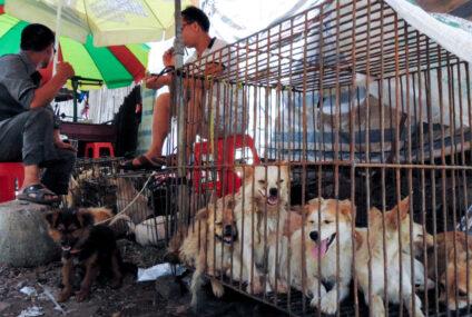 Vita da cani. La pandemia Coronavirus porta la Cina a provvedimenti epocali: stop a carne di cane, gatto e rettili