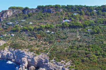 """Anacapri: l'Oro di Capri alle neofamiglie. Al via il progetto """"Nutri il corpo, nutri la mente, i mille giorni ad Anacapri""""."""