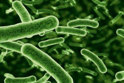 Il trapianto del microbiota intestinale  un possibile elisir di giovinezza