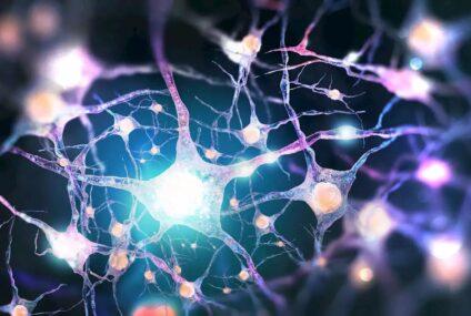 Il ruolo delle reti di patologia nella gestione delle malattie rare: l'esempio della SMA