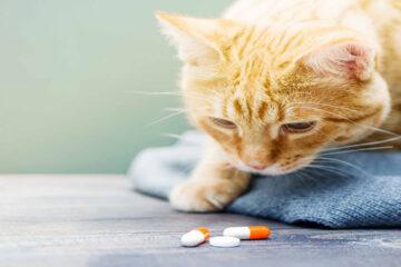 Il ministro Speranza firma decreto, ora possibile curare animali domestici con farmaci umani